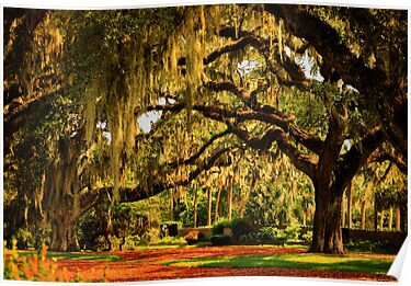 Old Southern Plantation Oaks by Kathy Baccari