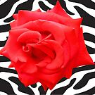 Zebra Rose by Mistyarts