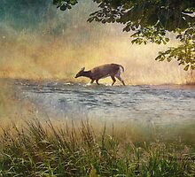 White Tail Deer Touting the Water - Parc National Mont Tremblant by Yannik Hay