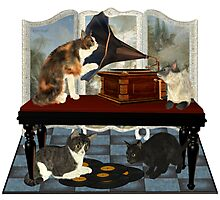 Musical Cats .. April Photographic Print