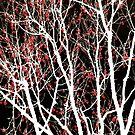 A Bright and Beautiful Season by Anne  McGinn