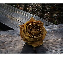 Twilight Rose Photographic Print