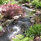 Bubbling Brook in the Garden by Paula Betz