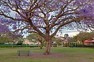 New Farm Park  Brisbane  Queensland by William Bullimore