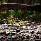 Mambray Creek by MellyClaire