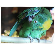 Colorful Parrot 2 Poster
