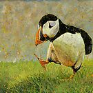 Puffin Strut by Richard Bradish Jr