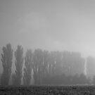 Poplars in the Mist by pennyswork