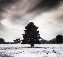 Winter in Elveden by Jon Downs