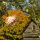 Fall Rose With and Log Cabin by Joanne Rawson