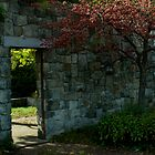 Stone Wall and Berry Tree in Fall by Joanne Rawson