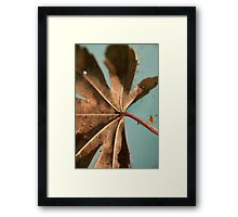 Floating and Drifting.... Framed Print
