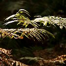 Turning Ferns by Wealie