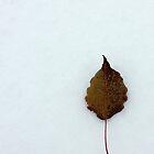 First Snow by David Piszczek