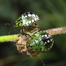 Green ladybird by 4Flexiway