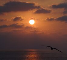 Peaceful - Pacific Ocean with sun and bird in an unique evening mood by Bernhard Matejka