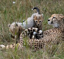 Cheetah & Cubs by Robert Taylor