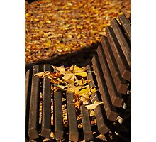 Bench Leaves Photographic Print