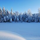 Swedish Winter by Mark Williams