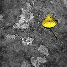 Yellow by SquarePeg