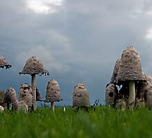 Ink cap mushrooms by LorrieBee