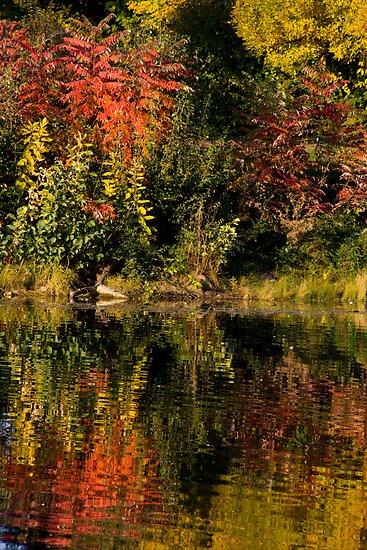 Lake Katherine Ripples and Reflections by Adam Bykowski