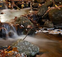 Autumn stream by Gisele Bedard