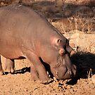Oncoming traffic, Kruger National Park, South Africa by Erik Schlogl