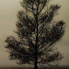 Ghost Tree by Julia Ott
