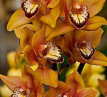 Golden Orchid1 by richchop
