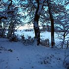 Snowy Wood at Dusk by clydeypops