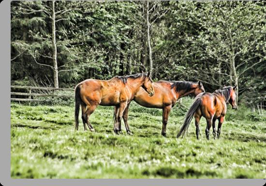 Horses by Trevor Kersley