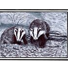 Two Badgers - Meles meles by Cantus