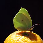 Citrus sp. and Butterfly by joancaronil