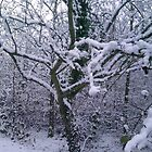 Snow covered tree by hgriffin1