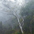 Eucalypt in the Mist by Harry Oldmeadow