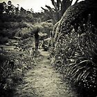Garden Path - Vumba Botanical Gardens by RatManDude