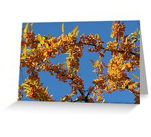 Fall Tree with Yellow Berries Greeting Card