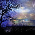 Night Fall © by Dawn M. Becker