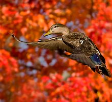 Autumn In The Air by Jeff Weymier