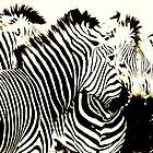 A blend of Zebras by mhm710
