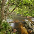 Brodribb River. by Bette Devine