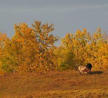 Autumn in the Pasture by Kathi Arnell