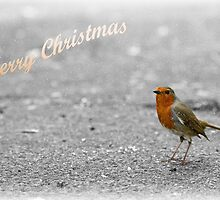 Robin Christmas card by Esther  Moliné