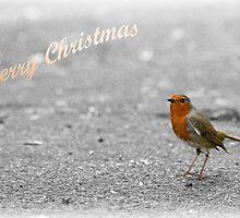 Robin Christmas card by Esther  Moliné