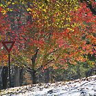 Yield to Autumn by reindeer