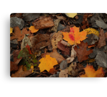 The Heart of the Leaf Grows Red Canvas Print