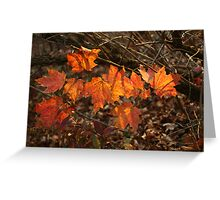 The Transparency of Fall Greeting Card