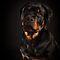 Canines - Mark Cooper & Alex Preiss