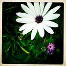 Daisy by Marita
